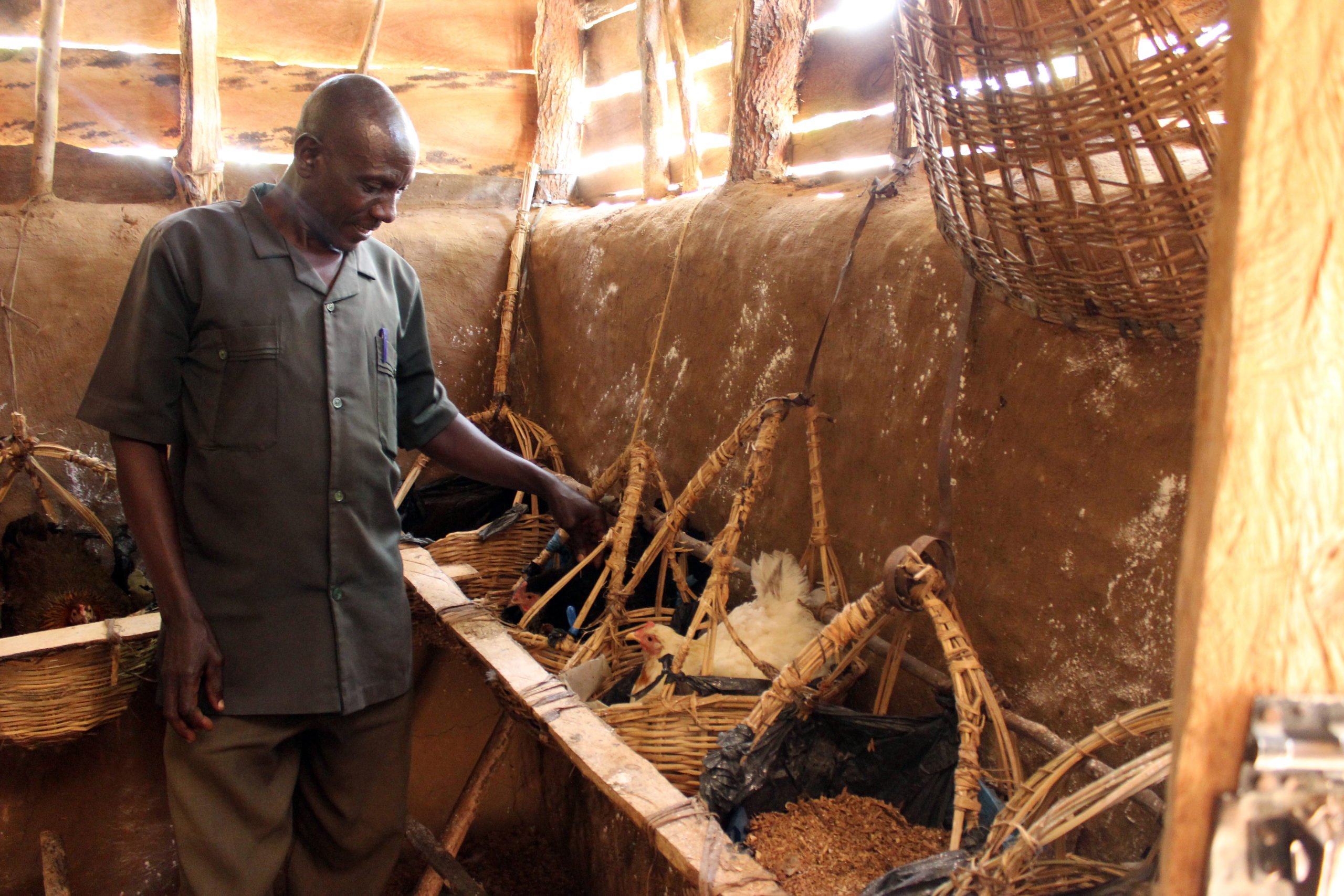 Daniel Opoma Papai kasvattaa naapureineen kanoja Kenian Busiassa.