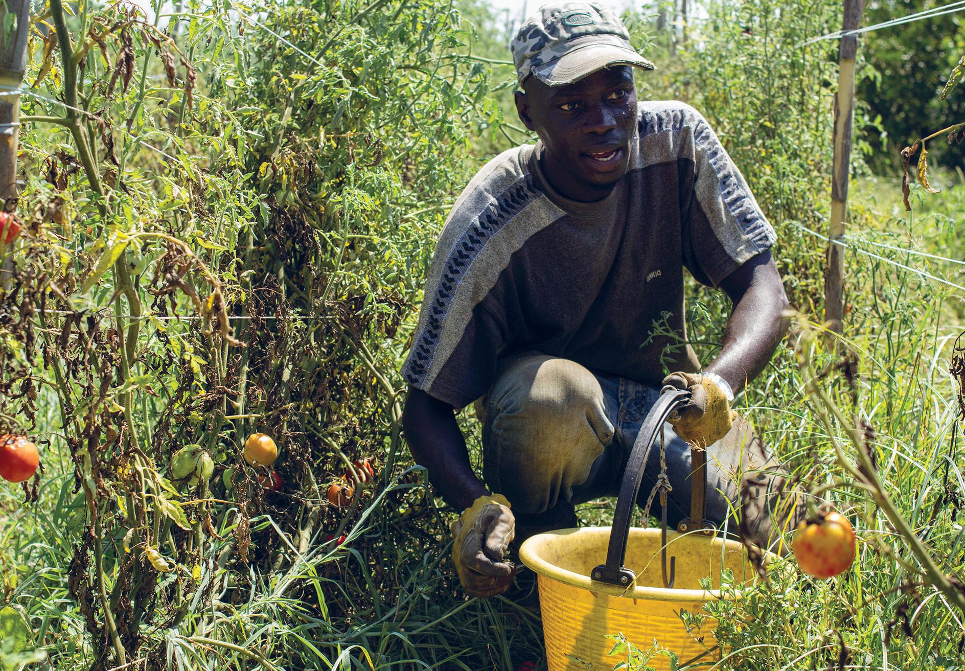 Senegalilainen Mohamed Niang tuli Italiaan veljensä perässä. Kotimaassa häntä kaipaavat vaimo ja kaksi lasta, joille hän lähettää rahaa kuukausittain.